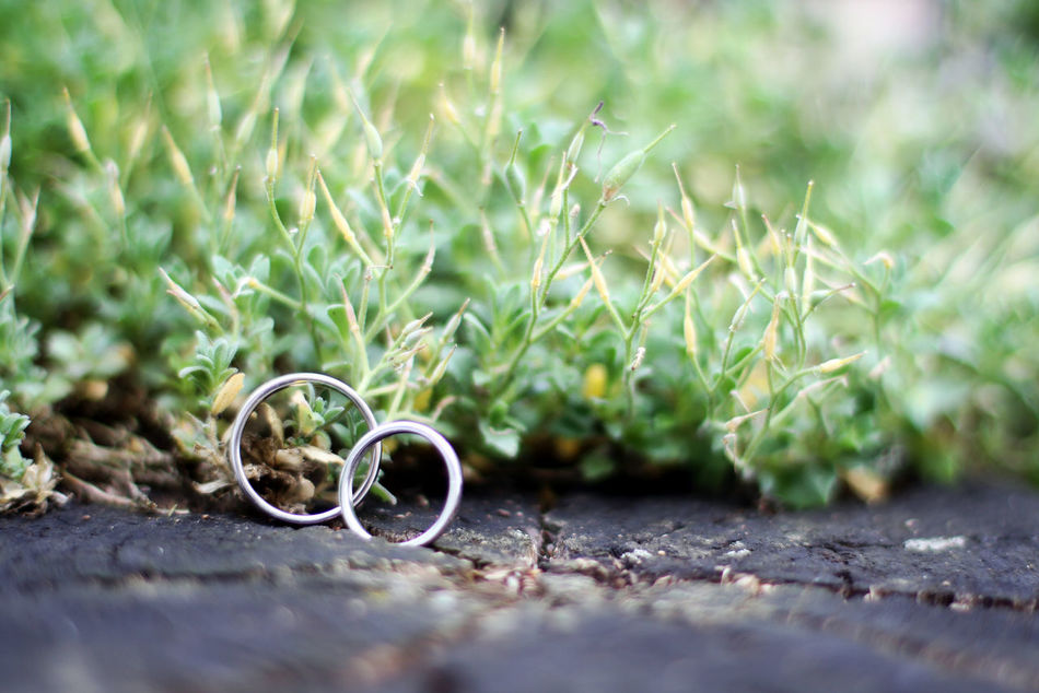 Close-up Grass Nature Plant Rings Wedding