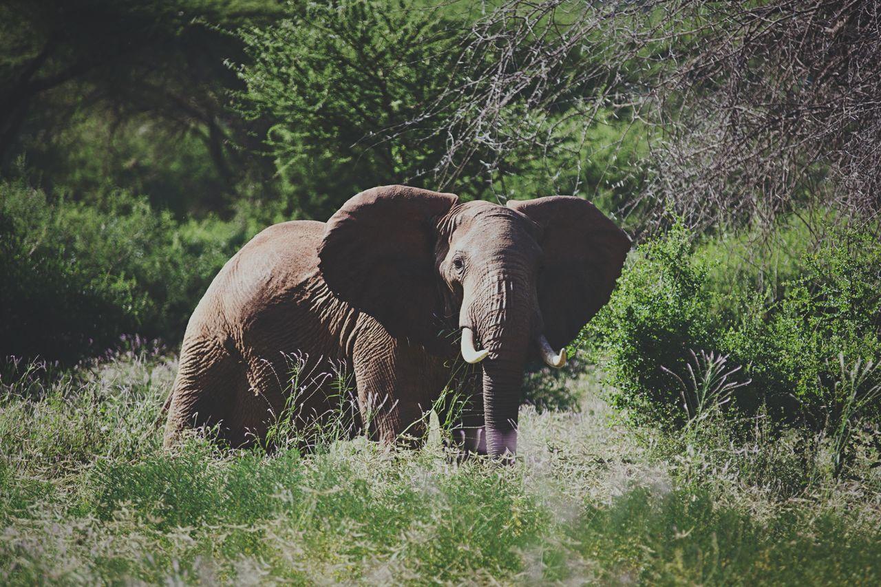 Safari Safaripark Hanging Out Elephant Hello World Enjoying Life Wildlife Wildanimal Naturelovers OpenEdit