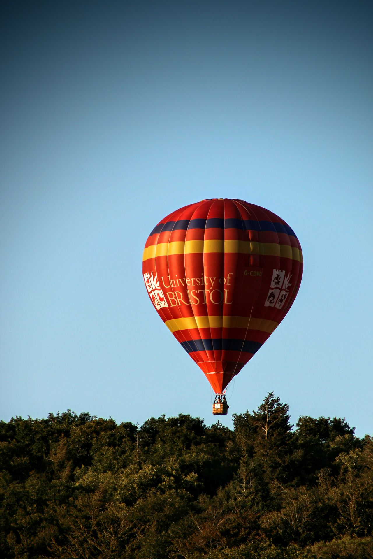 Balloon Festival Balloon Over The Treetops Over The Trees Floating Weightless Blue Sky Amazing View Enjoying Life Check This Out