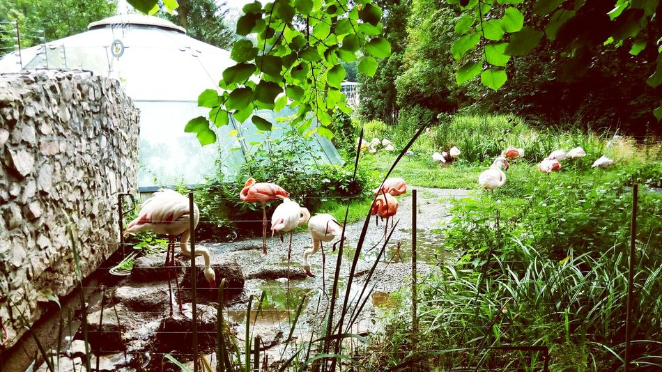 Liberec Zoo Natural Beauty