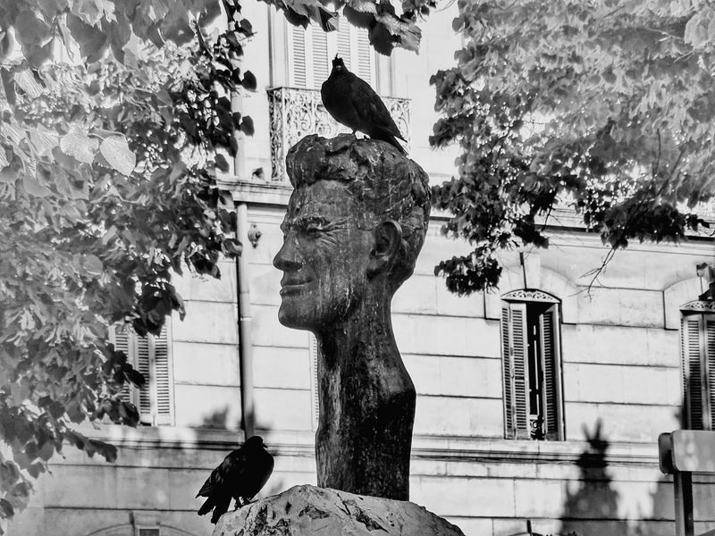 Building Exterior Statue Built Structure Architecture Tree Sculpture Outdoors Art And Craft Day Human Representation Low Angle View City No People Nature Bird Bnw_captures Bnw_planet Bnw_society EyeEm Bnw SONY DSC-HX400V Provence Alpes Cote D'azur EyeEm Gallery Monochrome Monochrome _ Collection Monochrome Photography