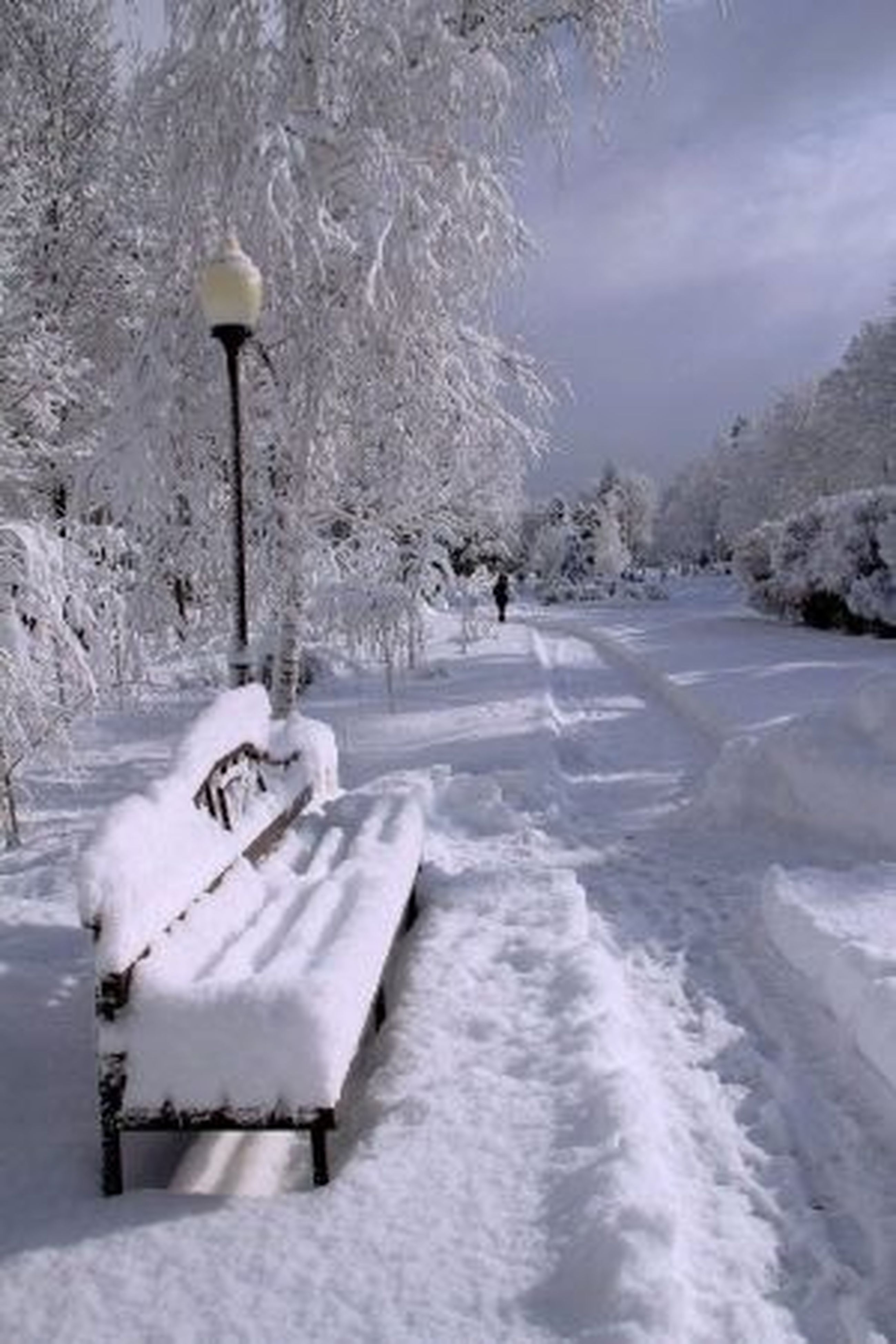 snow, winter, cold temperature, season, weather, covering, white color, frozen, nature, covered, tranquil scene, tranquility, landscape, snow covered, white, tree, beauty in nature, street light, field, scenics
