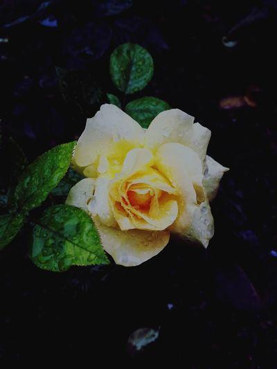 Flower Nature Close-up