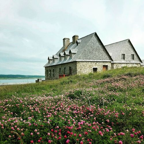 Beauty In Nature No People Springtime Rural Scene Clover Blossom Clover Flower Stone Cottage