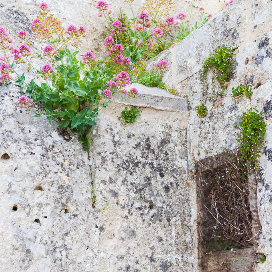 Travelling in Matera Distressed Walls Flowers,Plants & Garden Italy Matera Meshpics Stained Wall Walls Windows