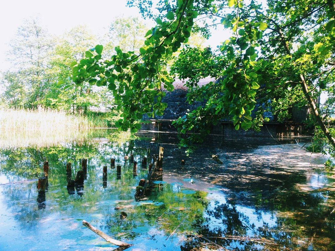 Lake Landscape Poland Lubuskie EyeEm Best Shots EyeEm Mobilephotography PhonePhotography Jezioro Niesulice