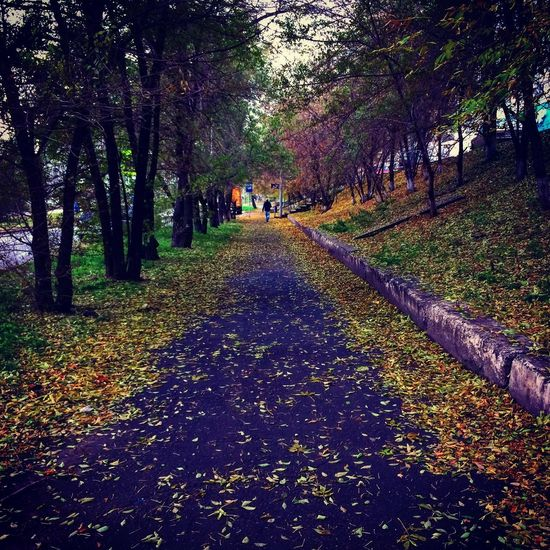 Autumn Nature Tree Change The Way Forward Leaf Beauty In Nature Tranquility Walking Forest Day Real People Outdoors Growth Scenics Landscape