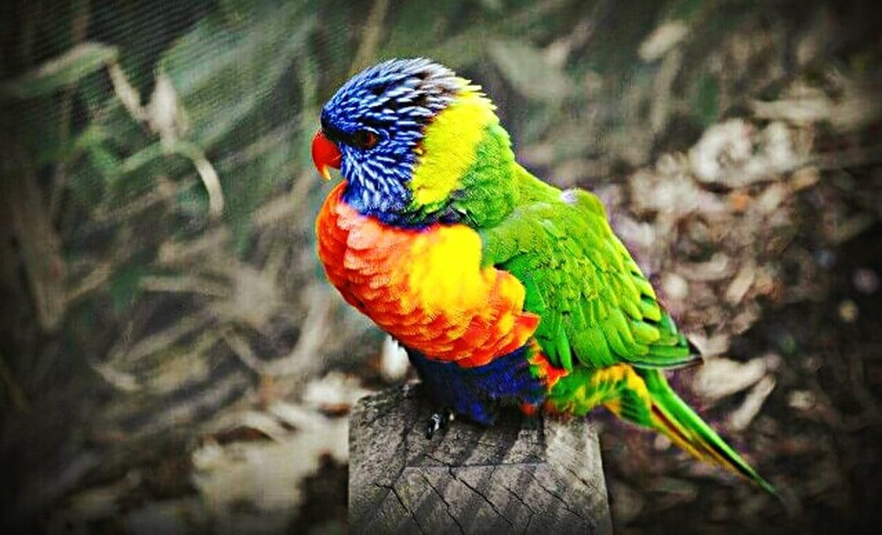 Birds Natural Color Beauty