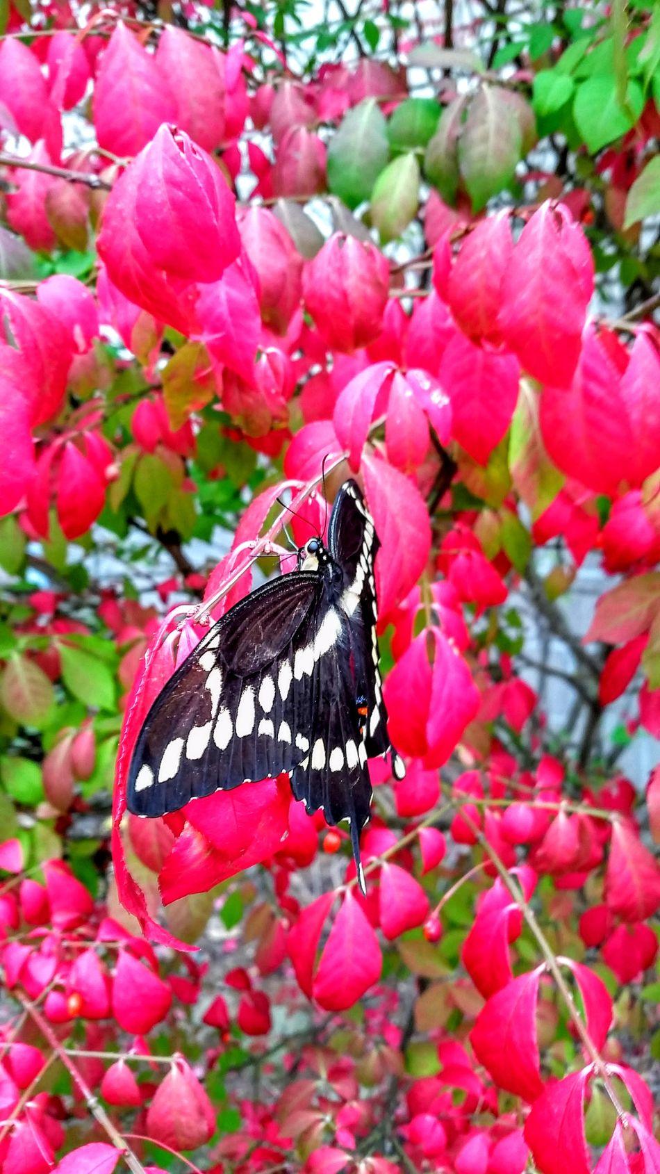 Eyemnaturelover Eyemphotos Eyem Best Shots Nature_collection Eyeemphotography Leafs 🍃 Flowers Of EyeEm Branches Millennial Pink Nature Close-up Beauty In Nature