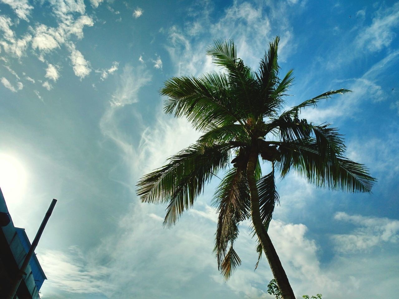 sky, palm tree, low angle view, tree, cloud - sky, day, no people, beauty in nature, nature, outdoors, growth, scenics