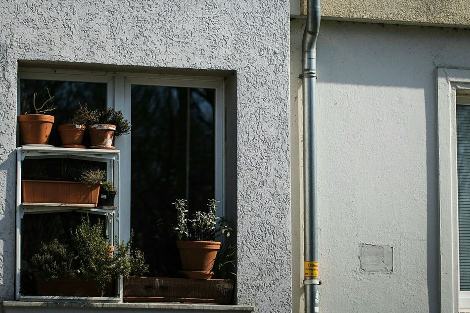 ~ Soaking Sun 🌱🌿~ Window Reflection No People Built Structure Architecture Plant Day Outdoors City Light And Shadow Getting Inspired Architectural Feature Architectural Detail Lines And Shapes Close-up Street Wall - Building Feature Geometric Shapes Streetphotography Plants Pot Potted Plant Windows Spring Sunshine