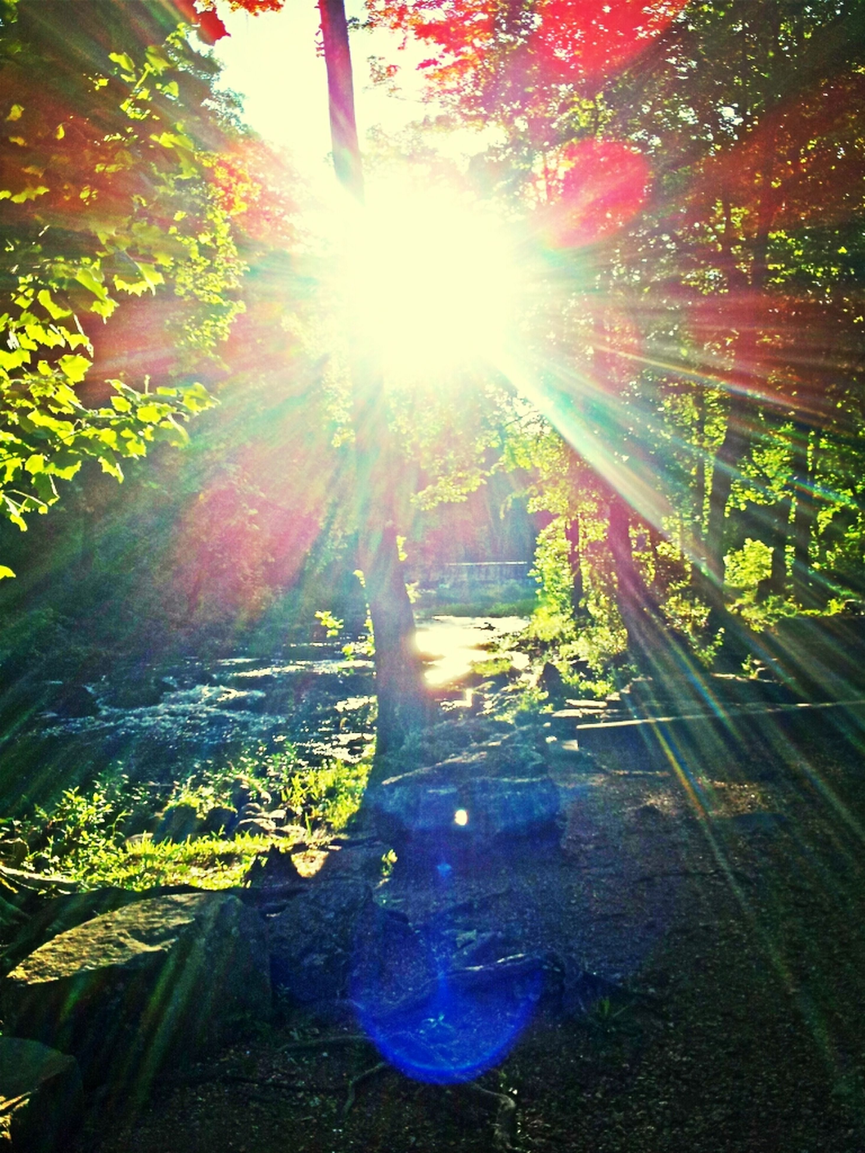 sun, sunbeam, sunlight, lens flare, tree, sunny, bright, growth, shiny, tranquility, nature, brightly lit, back lit, beauty in nature, solar flare, day, shining, tranquil scene, streaming, outdoors