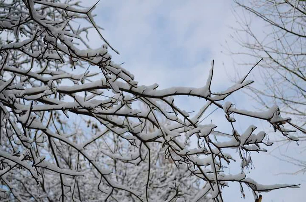 Rome Italy February 2012 Snow In Rome Branches Sky Clouds Snow White Nature Nature_collection