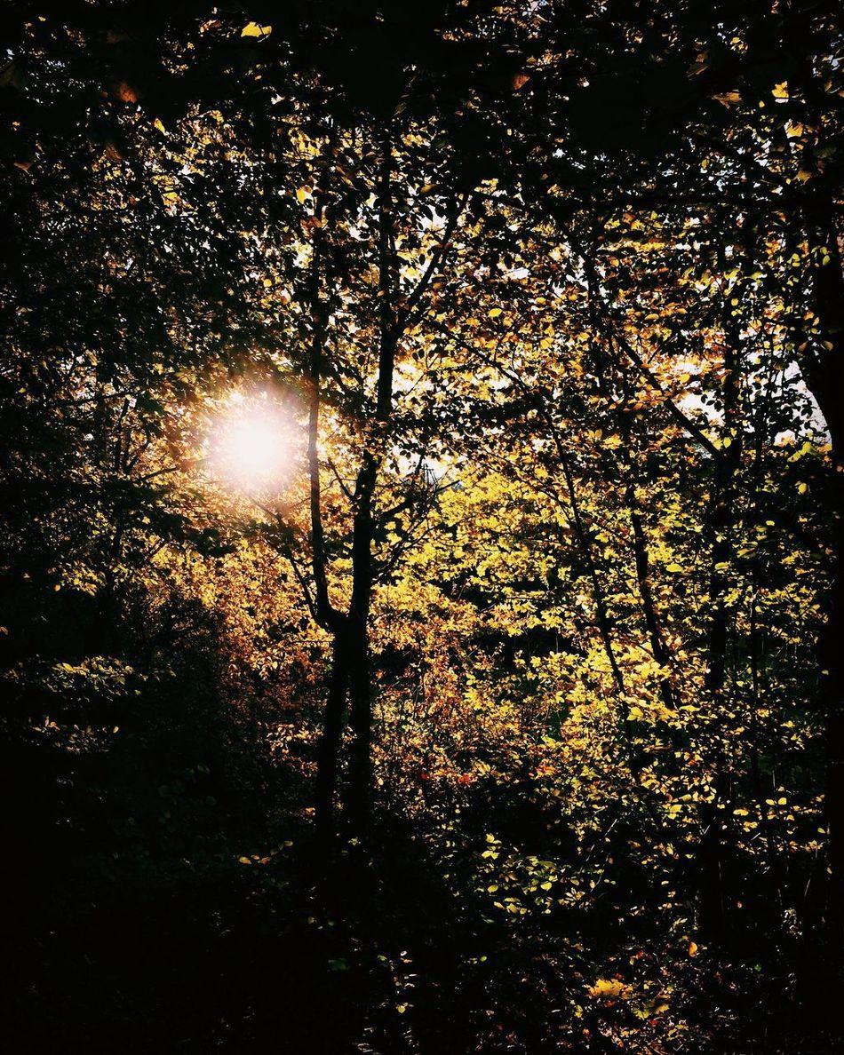 Nature Sun Sunlight Beauty In Nature Sunbeam Tree Autumn Herbststimmung