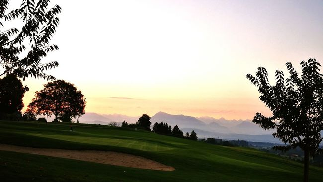 Tree Tranquil Scene Scenics Sunrise Sonnenaufgang Pilatus Golfcourse Golf Golf Is My Life ⛳️ Landscape Tranquility Beauty In Nature Clear Sky Mountain Green Color Nature Growth Remote Branch Outdoors Solitude Non-urban Scene Sky Mountain Range Sunrise - Dawn