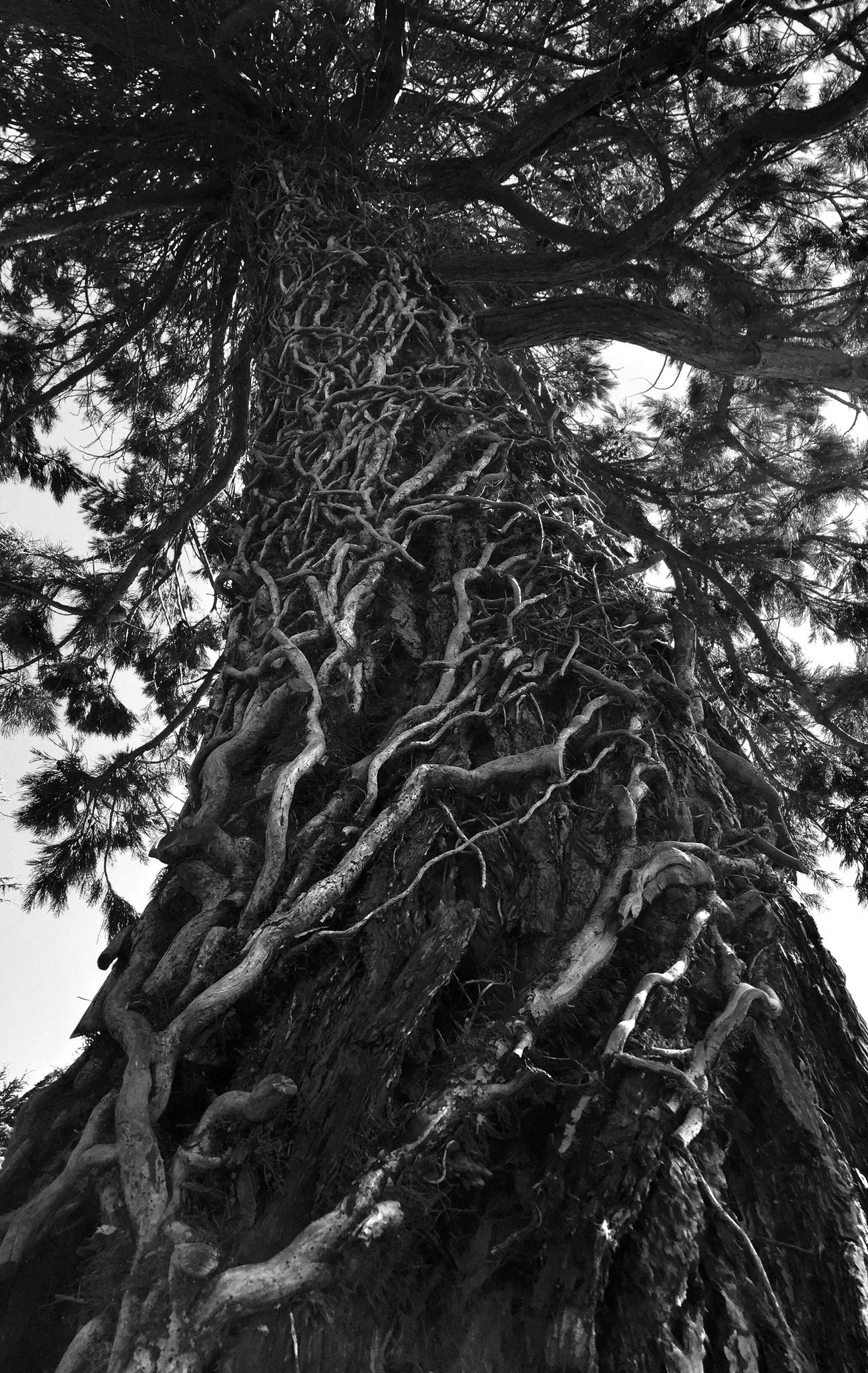 Trees TreePorn Monochrome Blackandwhite EyeEm Nature Lover Nature_collection Streamzoofamily Traveling