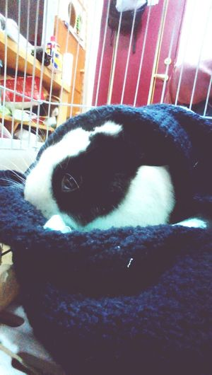 1218 凌晨好冷,穿個毛衣。 Coldweather Bunny  Cute Pets Dubee First Eyeem Photo