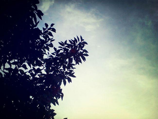 the sky above us Trees Theskyaboveus Sky
