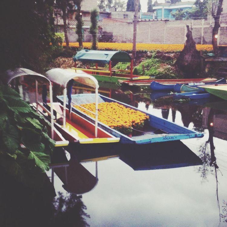 Xochimilco Trajineras Flordecempasuchil Ciudaddemexico