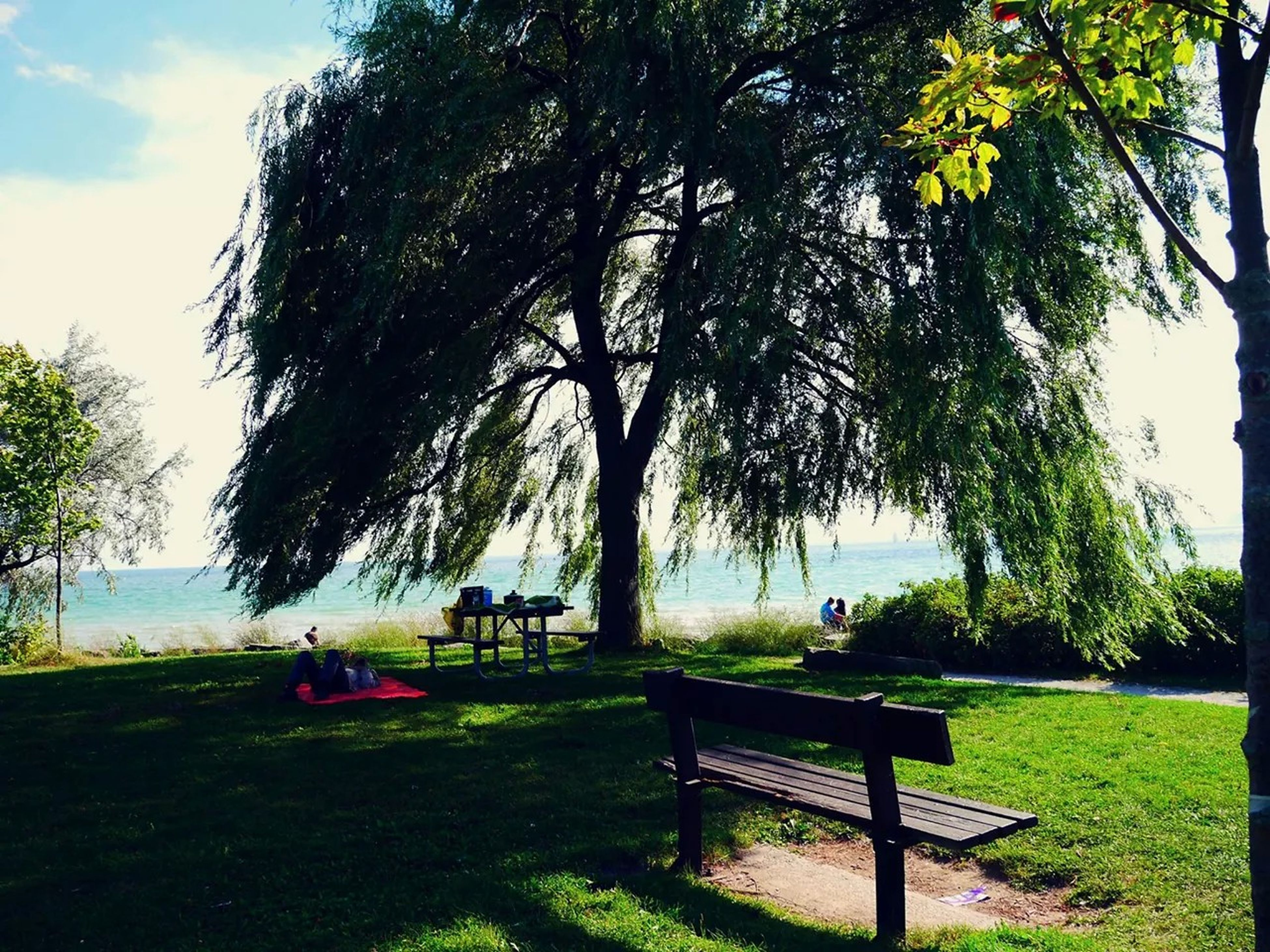 tree, bench, grass, relaxation, leisure activity, sitting, tranquility, park - man made space, tranquil scene, person, lifestyles, park bench, nature, men, scenics, sky, water, beauty in nature, chair