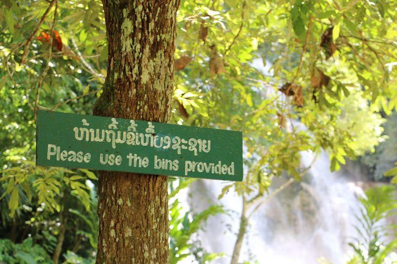 Tree in Laos.?