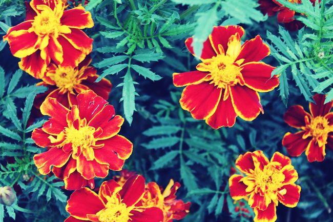 Flowers Eye4photography # Photooftheday Beautiful Views Nature Beatiful Nature Sunflowet Redyellow