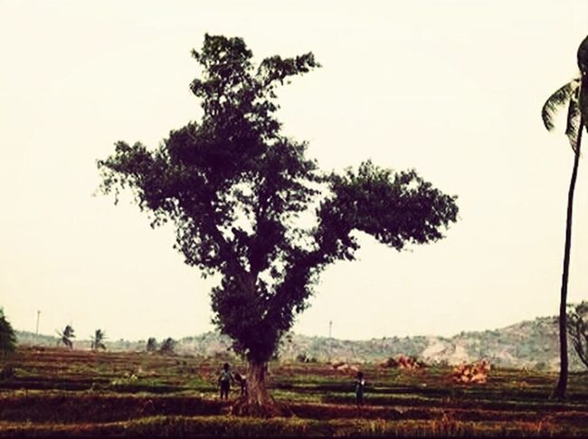 Our india...green india.....
