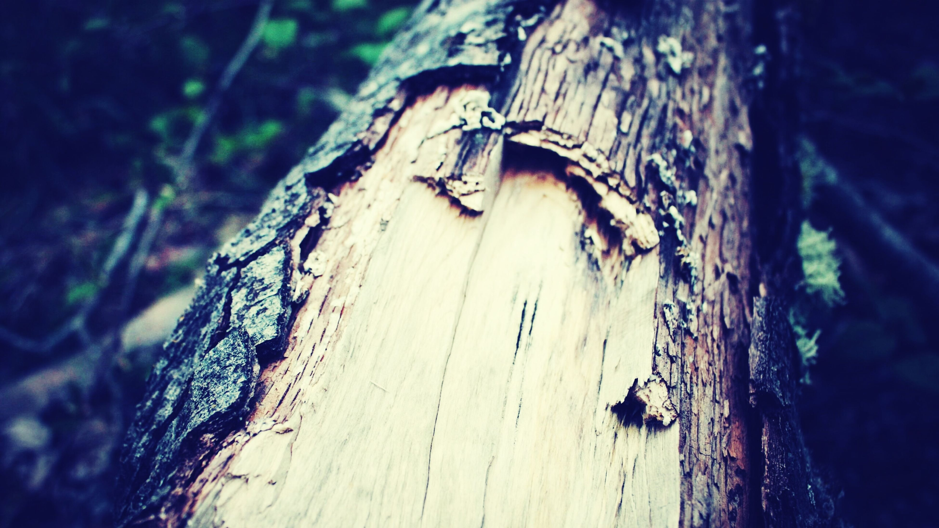 wood - material, weathered, damaged, close-up, wood, old, wooden, focus on foreground, run-down, built structure, textured, tree trunk, deterioration, outdoors, abandoned, day, nature, no people, architecture, house