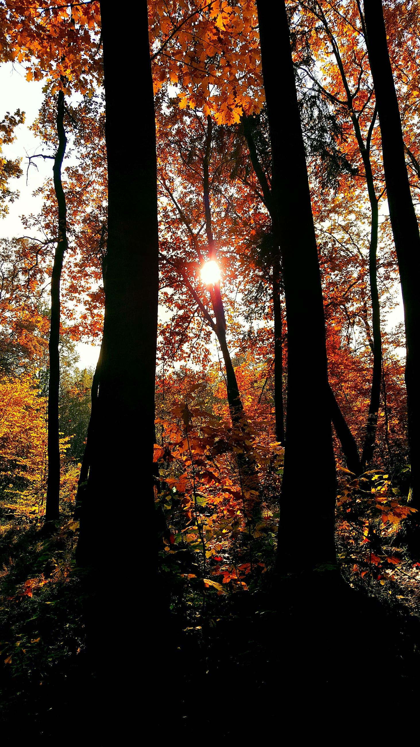 no people, orange color, tree, nature, sunset, silhouette, growth, close-up, sky, illuminated, beauty in nature, outdoors, backgrounds, day