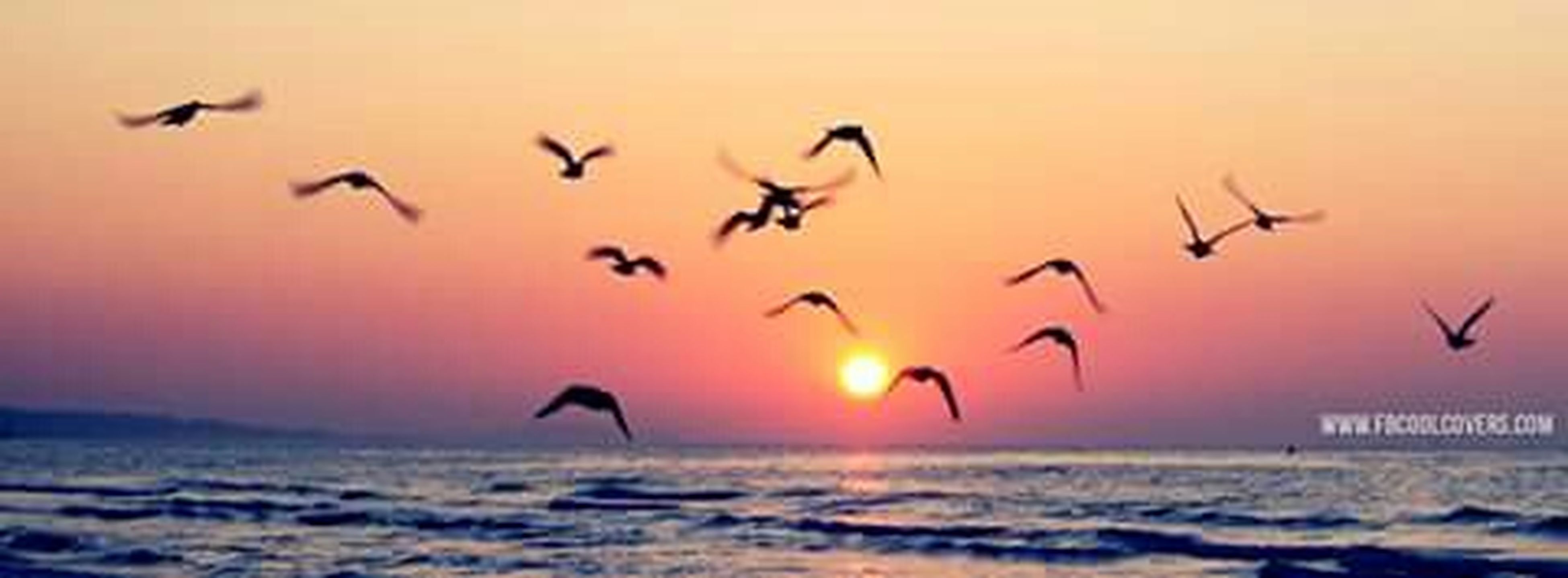 flying, bird, sunset, animal themes, orange color, animals in the wild, wildlife, sea, water, mid-air, flock of birds, nature, beauty in nature, beach, sun, scenics, spread wings, sky, seagull