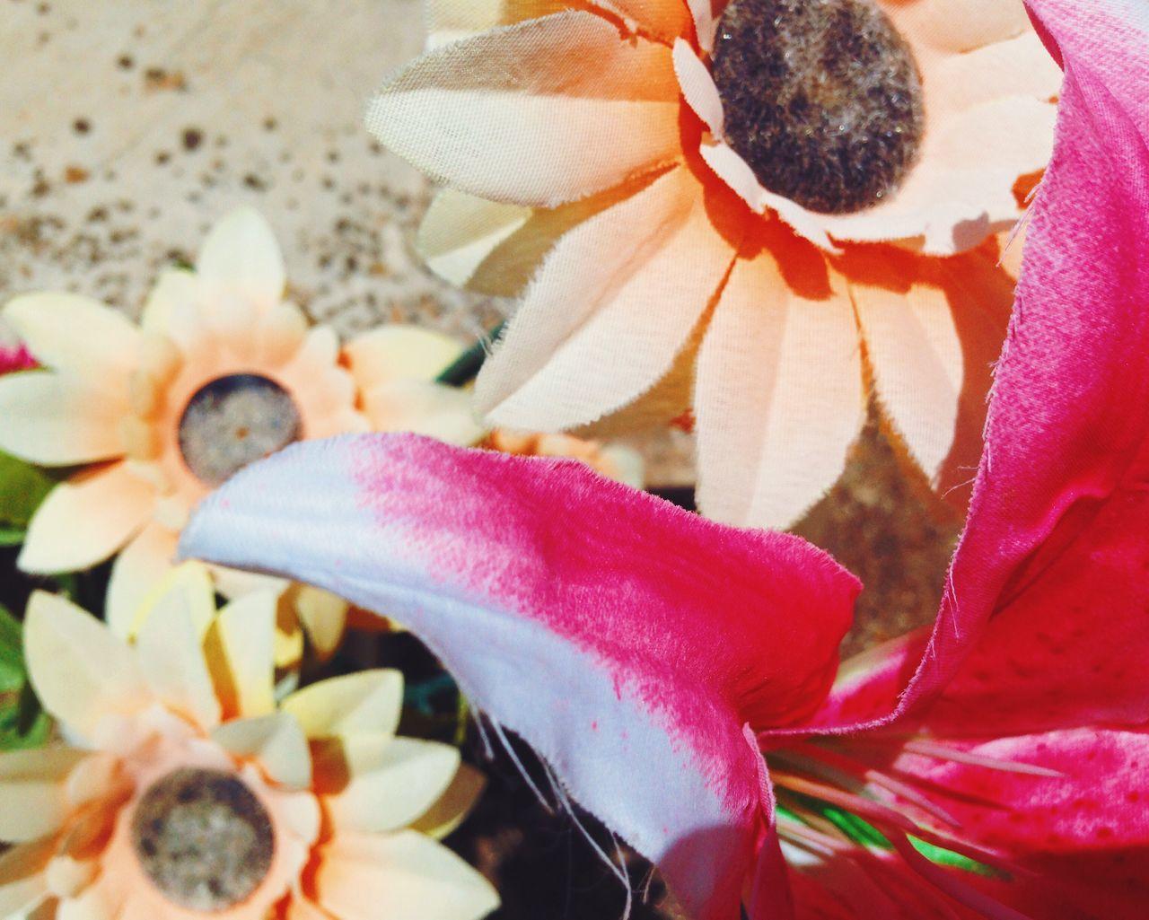Botany Close-up Detail Fake Fake Flowers Flower Flower Head Focus On Foreground In Bloom Orange Petal Pink Color Red Selective Focus Sunflower