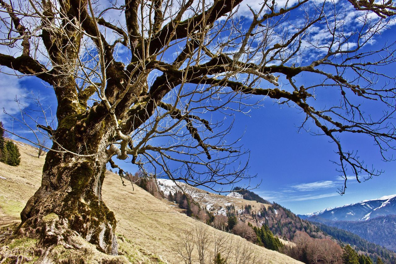 Tree Nature Sky Tranquility Outdoors Scenics Beauty In Nature Branch Day No People Mountain Walchsee Brennkopf Hiking Mountains Blue Sky Old Tree