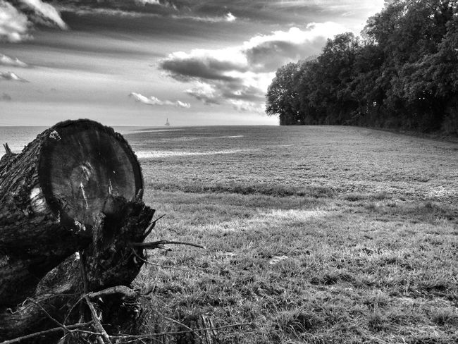 Landscape Landscape_Collection Black And White Naturelovers Landscapes With WhiteWall