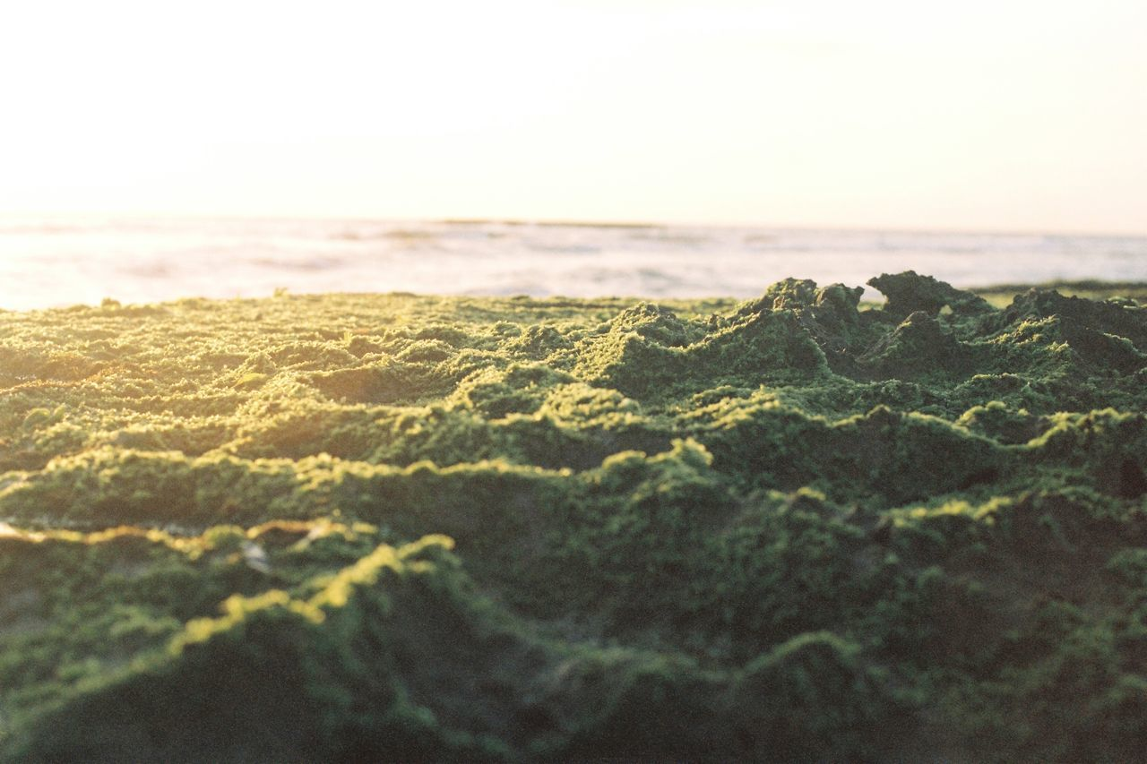 sea, nature, beauty in nature, no people, tranquility, tranquil scene, scenics, horizon over water, sky, landscape, moss, outdoors, day, close-up, beach, water, tilt-shift