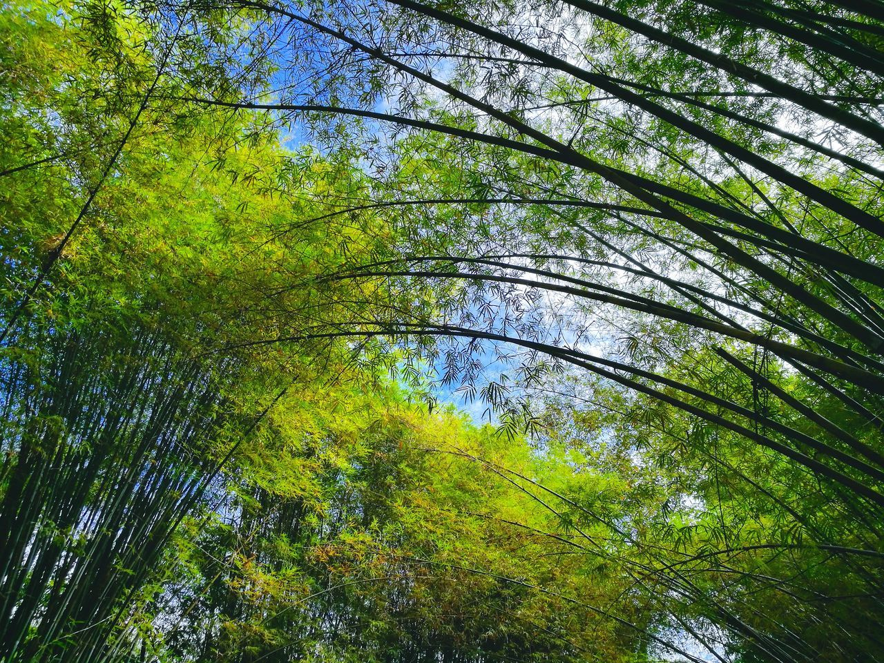 Tree Growth Nature No People Low Angle View Green Color Beauty In Nature Sky Day Backgrounds Outdoors Tranquility Multi Colored Close-up Bamboo Grove EyeEmNewHere