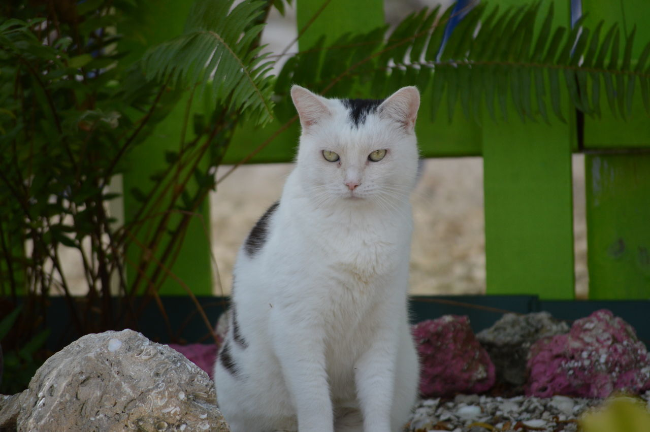 Portrait Of Cat Relaxing On Rock