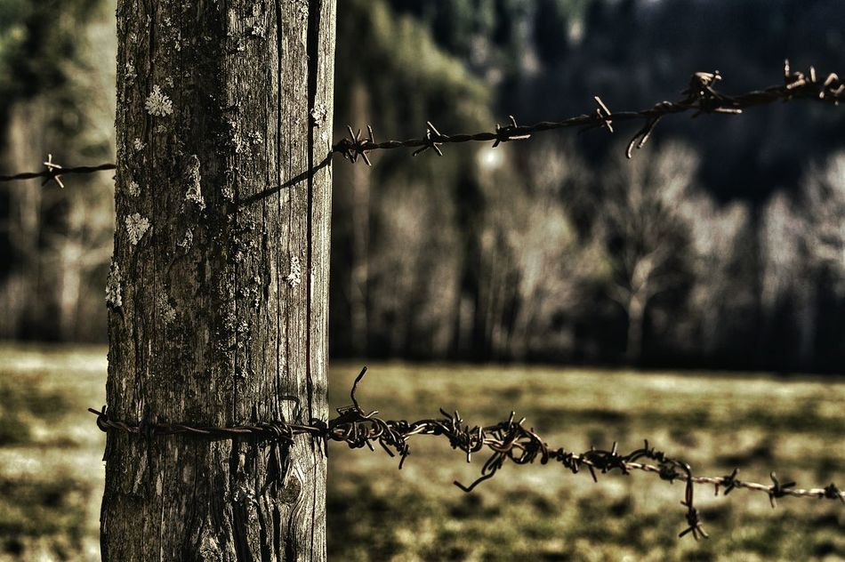 Old Fence Barbed Wire Barrier Barbed World EyeEm Gallery Hello World Beautiful Nature Eye4photography  Austria ❤ Nature Farm Field Urban Nature Nature Photography Themoment Thank You My Friends 😊 Very Beautiful Thanks For Follow Me Naturephotography Thanks4thefollow EyeEm Best Shots Worldwide World_shot Hello Friends :) Nature_collection Nature Is My Best Friend
