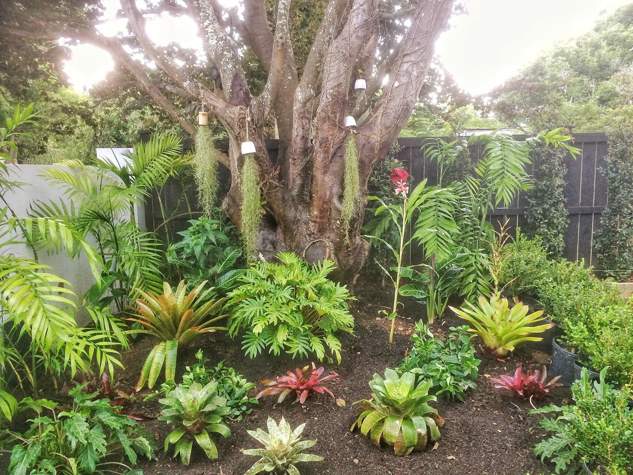 New Garden I made today 😊 Tropical Garden Tropical Plants Bromeliads Palms Tilandsia Growth Tree Green Color Leaf Freshness Lush Foliage Garden Photography Gardenia
