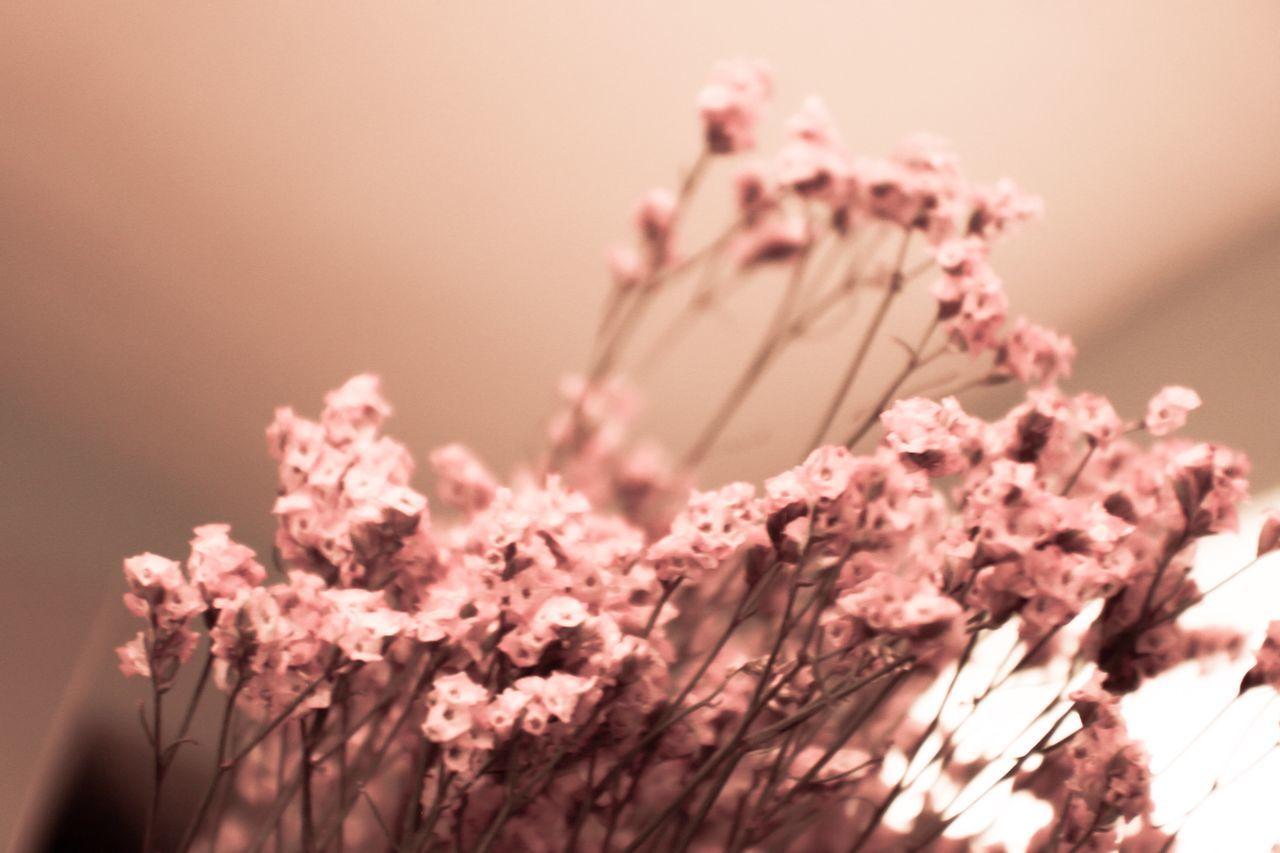 Portrait Found On The Ro Dried Flowers Maximum Closeness EyeEmNewHere