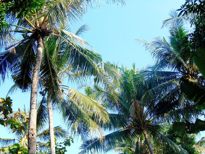 No, this was not taken at the beach. From a trip to grampa's during Eid. Mudik Village View Tropical