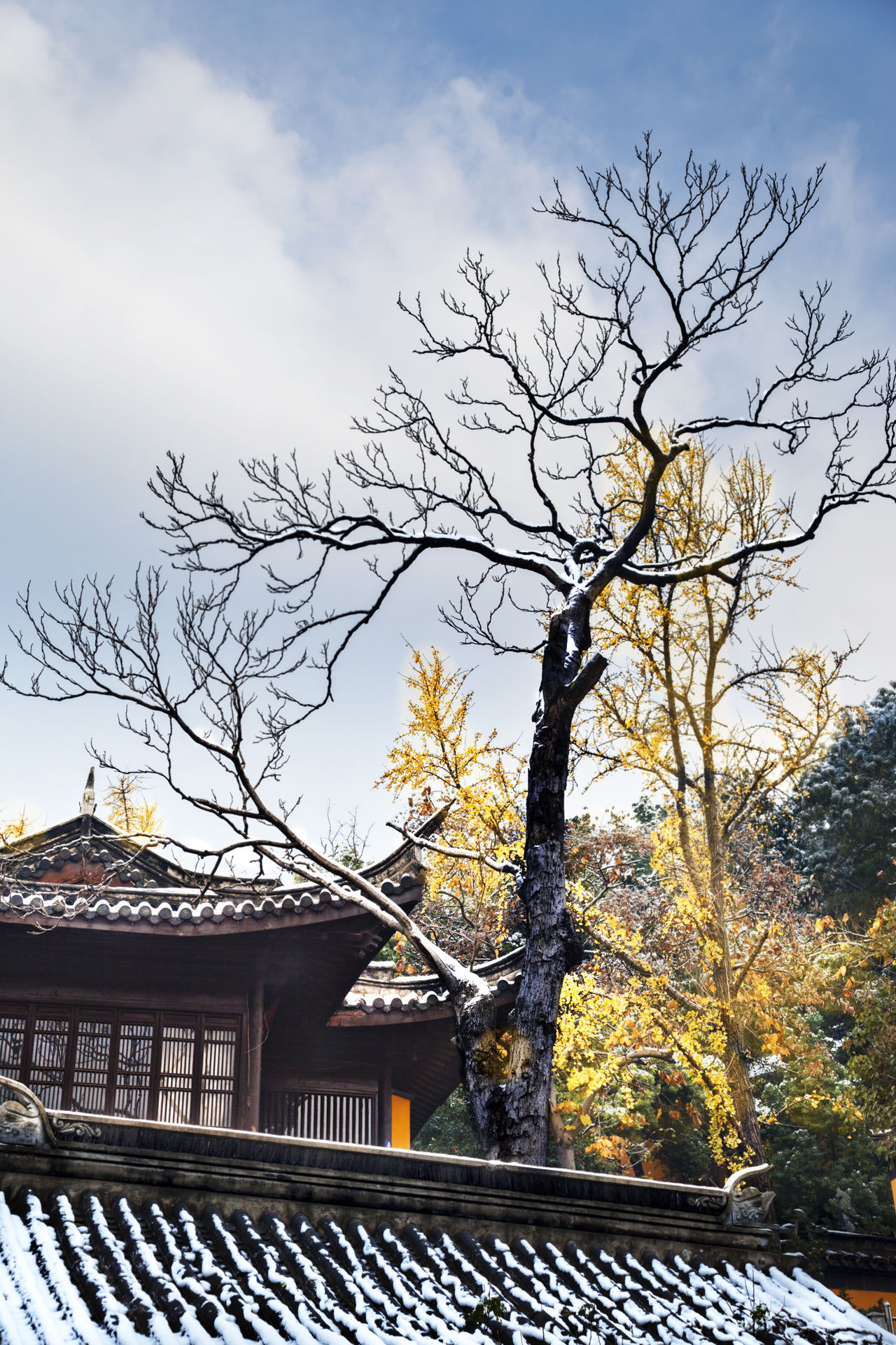 The Fall colors in the snow Famous Places Tourist Attractions Tourist Destination Architecture Autumn Autumn Leaves Building Exterior Built Structure City Day Fall Beauty Fall Colors Fall Leaves Ginkgo Trees Nature No People Outdoors Sky Snow Snow Vew Tree Vertical Composition