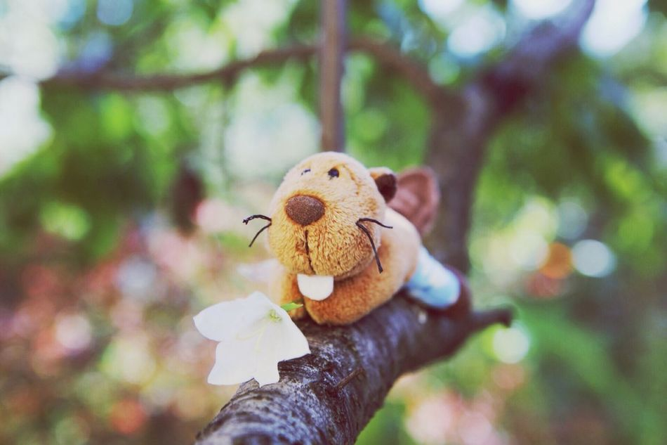 Beautiful stock photos of toys, Animal Representation, Branch, Day, Flower