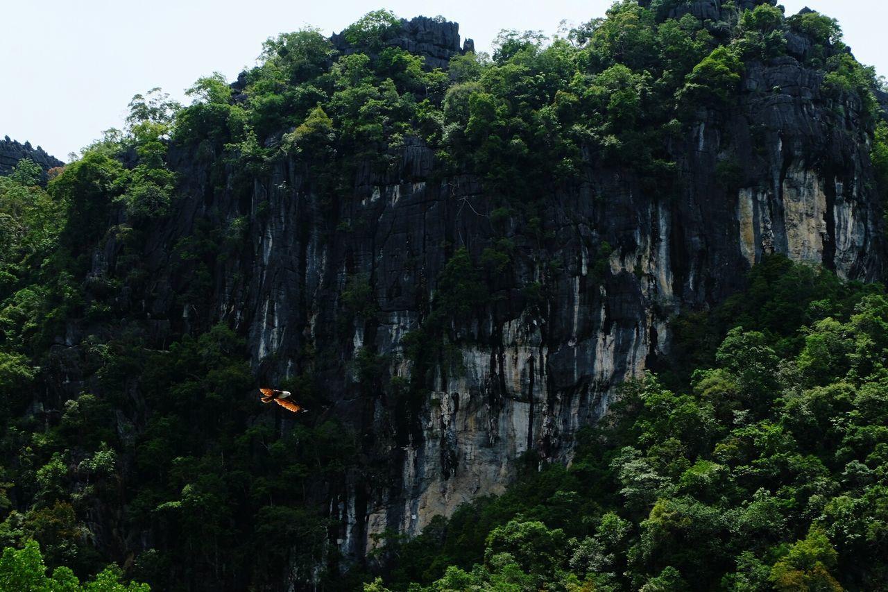 Eagle Mangrove Tour Langkawi Island