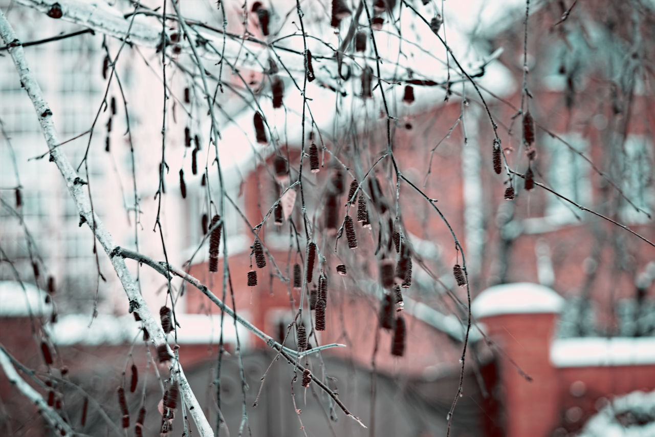 Birch Close-up Day Landscape Nature Nature Nature On Your Doorstep Nature Photography Nature_collection Naturelovers No People Outdoors Snow The Great Outdoors 2017 Eyeem Awards The Great Outdoors With Adobe
