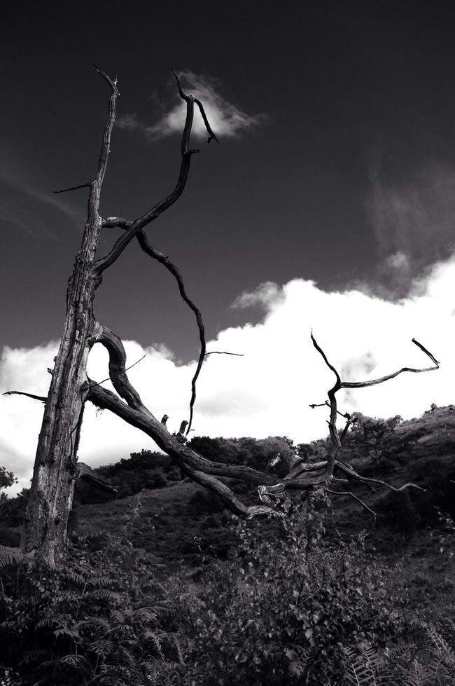 Dead wood... Tree Porn Black & White Landscape Scotland