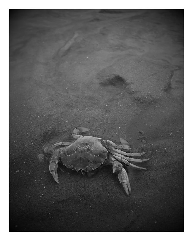 Beach Sand High Angle View Dead Crab Shore Dead Animal Zoology Beauty In Nature Beach Photography Seashore Crosby Beach Black And White Monochrome