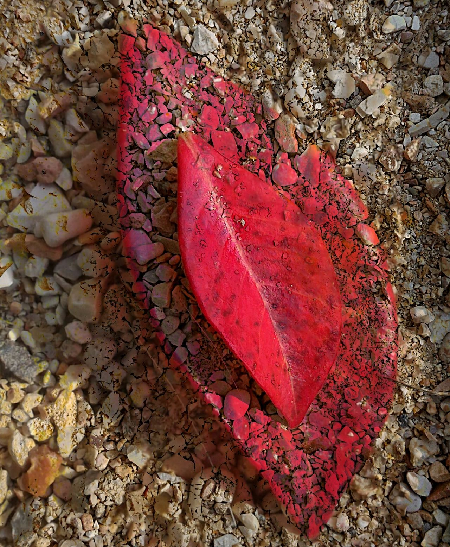 Foglia Leaf Rossofuoco Firered Piccolabellezza Littlebeauty Marvellous Autunno  Autumn Autumn Leaves Fall Rossogrigio Redgrey