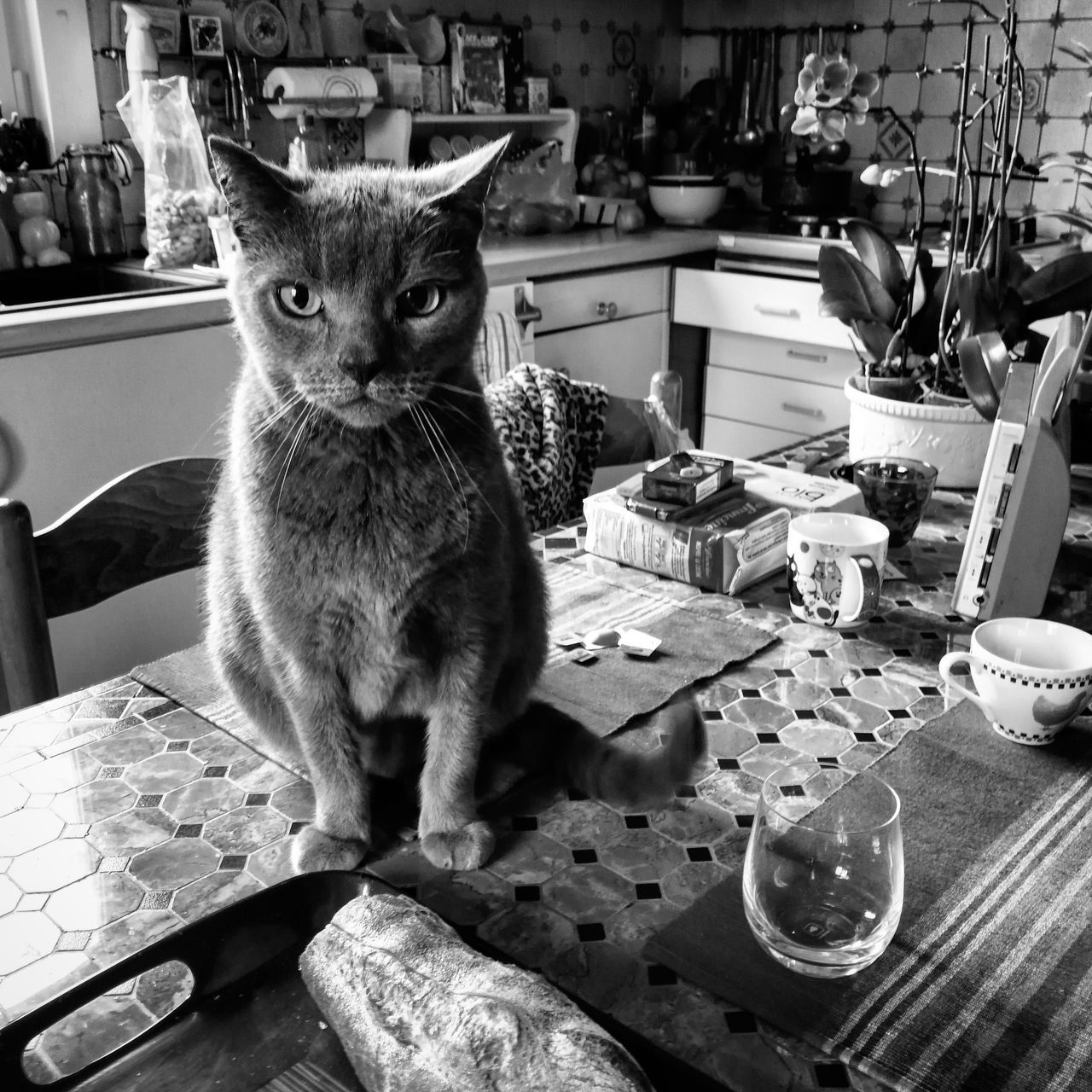 Sunday cat morning 😸 Home Interior Indoor Photography Monochrome Cat Catoftheday Animal Themes Animal Photography Domestic Life Interior Photography Blackandwhite Black And White