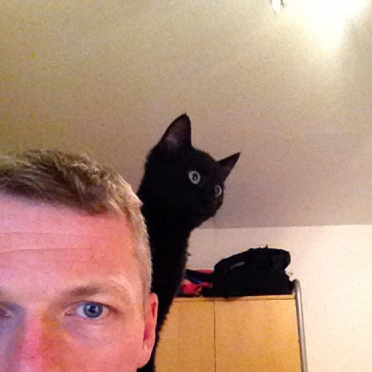 Blacky denkt wohl er sei ein Papagei :-) Cat Sklfamily Katze Blacky