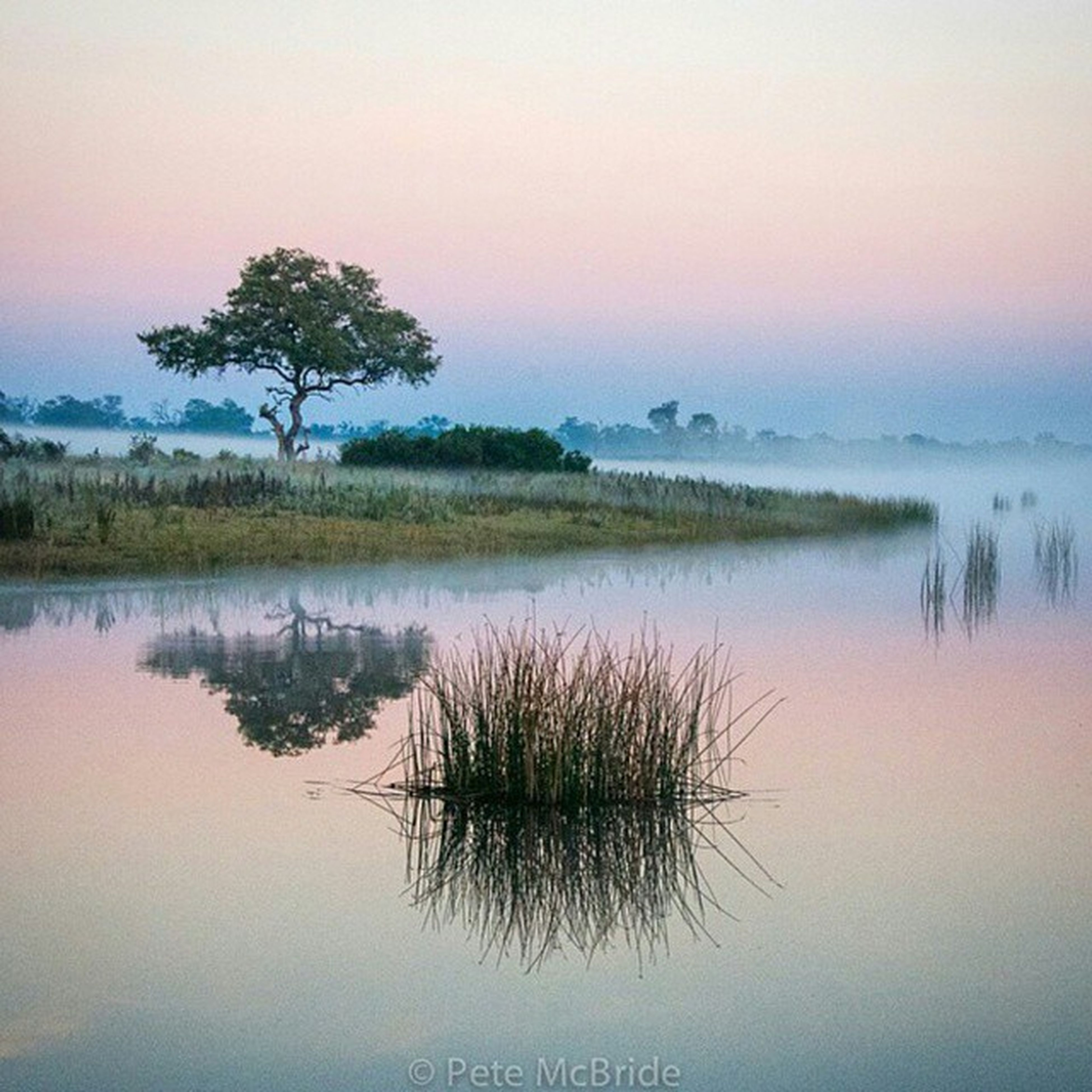 tranquil scene, water, tranquility, sunset, scenics, lake, reflection, beauty in nature, nature, sky, idyllic, tree, clear sky, waterfront, plant, silhouette, growth, calm, standing water, non-urban scene